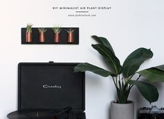 DIY AIR PLANT WALL ART