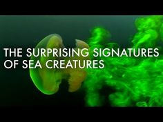 On land, animals leave footprints that tell us a lot about their size, form and capabilities. Marine organisms do this too, but these footprints are harder to see since water is translucent. Bioengineer Kakani Katija explains how she uses dyes, lasers and more to make them visible, so that she and her intrepid collaborators can understand more about how sea organisms move.
