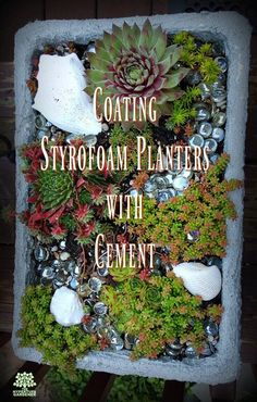 My Styrofoam planters made from a discarded Styrofoam box look just like hypertufa. Make them even more realistic by coating them with hypertufa slurry! See how on my post. VIDEO TOO. via @hypertufagarden