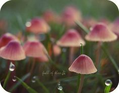 Possibly the prettiest mushrooms I have ever seen. (photo by fullofbliss)