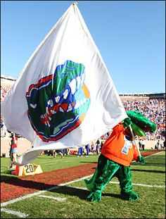 The University of Florida Gators mascot Albert is a fixture on the UF sidelines. Here he waves the Gator battle flag at the Swamp. Uf Gator, Florida Gators Football, Lsu, Florida Girl, Old Florida, Universities In Florida, Colleges, Dream School, Tim Tebow