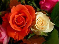Imagens de Flores - Imagens Top