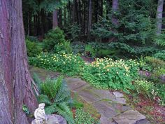 Shade Garden Pictures Sea Cliff Gardens Bed & Breakfast Port Angeles, WA
