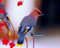 Uccello colorito
