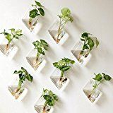 Mkono 2 Pack Wall Hanging Plant Terrarium Glass Planter, Diamond Fill with small plants, or other decorative objects and use as an eye-catching decorative accent for any space. Ideal for home, offi… Hanging Glass Planters, Hanging Air Plants, Hanging Gardens, Hanging Wall Planters Indoor, Hanging Plant Wall, Diy Hanging, Hanging Baskets, Indoor Plant Wall, Indoor Plants