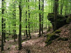 Vogelsberg, Felsenruhe Herbstein