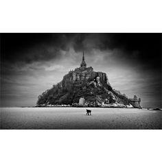 Tableau toile dartistes : Le chien du Mont-Saint-Michel