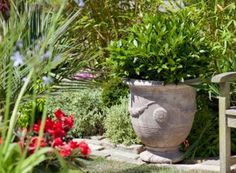 Terracotta Pot - Large  (69cm tall by 60cm wide)