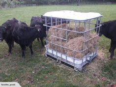 Diy Hay Feeder Lovely Ibc tote Turned to Diy Hay Feeder for Calves Great for Goats or Of Diy Hay Feeder Luxury Viewing A Thread Sto Goat Hay Feeder Diy Hay Feeder, Cow Feeder, Sheep Feeders, Goat Hay Feeder, Horse Feeder, Feeder Cattle, Mini Cows, Mini Farm, Cattle Farming