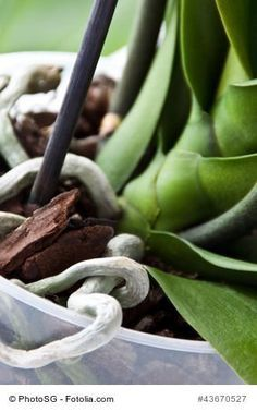 Garten The most common mistakes in orchid care at a glance: plant, water, fertilize, the right locat Potted Plants Patio, Balcony Plants, Water Plants, Indoor Plants, Orchid Plants, Exotic Plants, Garden Care, Herb Pots, Garden Pots
