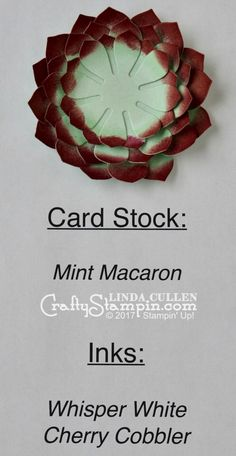 Stampin Scoop Recap - Episode 29 - Succulent Garden Suite - Crafty Stampin