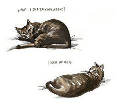 Cat Talk by Wendy Macnaughton