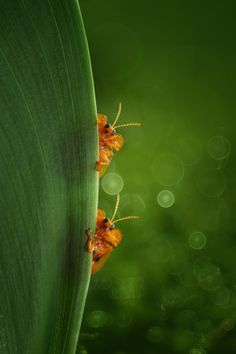 hey, look at that...!!! by Yusri Harisandi on 500px