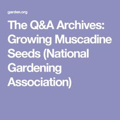 Growing Muscadine Grapes from Seeds (National Gardening Association)