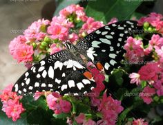 Beautiful Colorful Butterflies | Beautiful colorful butterfly close-up | Stock Photo © Natalija ...