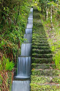Small artificial canal called levada, part of an ancient irrigation system, flowing through a temperate primary forest called laurisilva, Madeira (4201-76751 / 00621587 © Minden Pictures)