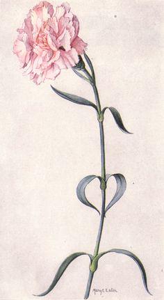 Meine Lieblingsblumen: Carnations, Nelken