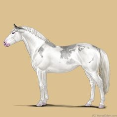 Horse Eden Eventing is an exciting online horse game. Come check us out! Painted Horses, Anime Animals, Cute Animals, Horse Tack Rooms, Horse Animation, Horse Games, Garden Animals, Painted Pony, Horse Pictures