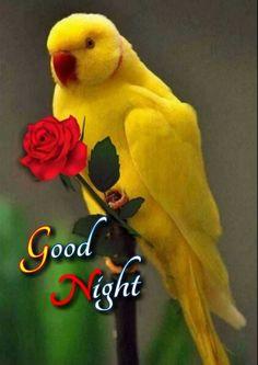 Good Night All, Good Night Image, Good Night Quotes, Lord Shiva Statue, Night Gif, Dinosaur Stuffed Animal, Animals, Martin Luther, Gallery