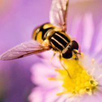 Common Garden Plants Killing Bees, Report Says : DNews