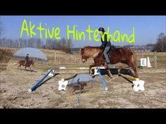 Hinterhandarbeit - Wie erreiche ich eine Lastaufnahme der Hinterhand - YouTube