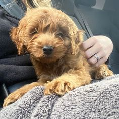 Cherish family, friends, and of course furry friends— no matter the distance. Congrats on your new puppy, @avgoltz! New Puppy, Distance, Puppies, Friends, Dogs, Boyfriends, Pet Dogs, Long Distance, Baby Dogs