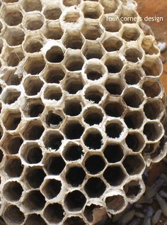 nature's inspiration...wasp nest...four corners design
