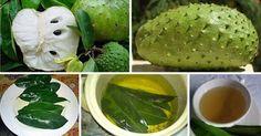 Las hojas de guanábana son 1000 veces más fuerte para matar las células de cáncer que la quimioterapia ~ Consejos de Salud