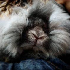 #countryhomefarm  #bunnynose for #eskimokisses