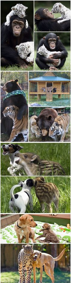 Animals Can Feel Love And Compassion Too