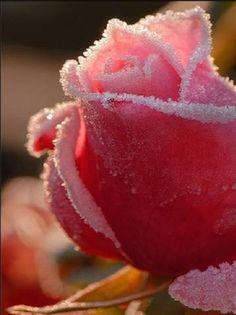 winter in the garden .. X ღɱɧღ ||
