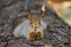At lunchtime by Roman Zaev - Photo 145949481 - 500px