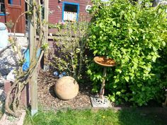 Unser Garten Garden