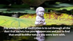 The whole effort of meditation is to cut through all the dust that society has poured upon you and just to find that small buddha-nature you were born with. OSHO #effort #meditation #cut #dust #society #poured #upon #buddha #nature #born #osho