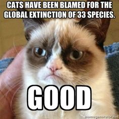 We probably didn't need them anyway! - Grumpy Cat