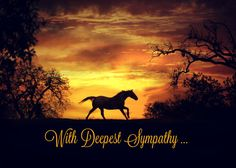 Horse Owner Condolence Deepest Sympathy Card by Equineandwine