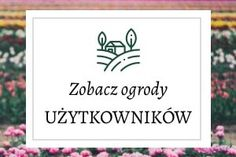 Marchewka z własnej grządki - jak uprawiać marchewkę? - Mój Piękny Ogród - Ogrody ozdobne, Rośliny, Kwiaty