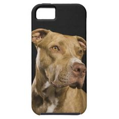 =>>Cheap          Portrait of red nose pitbull with black iPhone 5 cases           Portrait of red nose pitbull with black iPhone 5 cases today price drop and special promotion. Get The best buyReview          Portrait of red nose pitbull with black iPhone 5 cases Online Secure Check out Qu...Cleck Hot Deals >>> http://www.zazzle.com/portrait_of_red_nose_pitbull_with_black_case-179411595349569731?rf=238627982471231924&zbar=1&tc=terrest