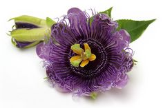 Calming Passionflower, seems to live up to its name: a plant that provides overflowing goodness for your mind and body. Learn more  Have you tried it?