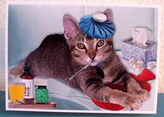 Sickbed Blues handmade blank photo card ( cat tabby sick flu cold cough get well thinking of you doctor nurse hospital illness sympathy )