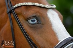 Stunning eyes and diamond-inlaid headstall! Photo by: Hypo Focus Paardenfotografie