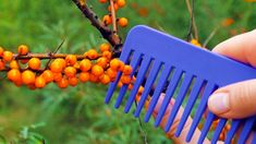 Easy Crafts To Sell, Diy Home Crafts, Amazing Life Hacks, Useful Life Hacks, Gardening For Beginners, Gardening Tips, Guter Rat, Growing Seeds, Hacks Diy