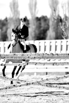 Love the natural show jumping fence here, and a lovely, bright and eager horse to boot!