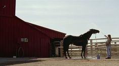 Horse Movies, Dark Horse, Horses, Animals, Animales, Animaux, Animal, Animais, Horse
