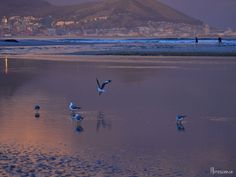 Early morning on the beach, Milnerton Lagoon, Cape Town,(c) Floresence
