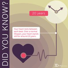 Did You Know! #funfacts #heart #anatomy