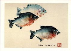 Gyotaku is the art and technique of Japanese fish rubbing. The first Gyotaku prints were created to preserve a true record of the size and species caught by Japanese anglers. The oldest known prints were commissioned in 1862 by Lord Sakai in the Yamagata Prefecture to preserve the memory of a record catch.