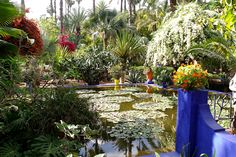 Morocco_Gardens_Jardin_475423.jpg (1280×853)