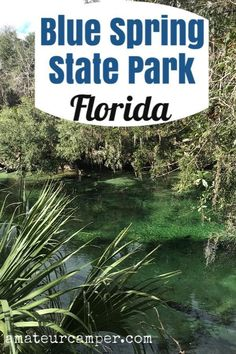Blue Spring State Park is a fantastic place to observe Manatees in their natural envionment during the winter months in Florida. Florida Camping, Kayak Camping, Florida Vacation, Florida Travel, Travel Usa, Blue Springs State Park, Florida Springs, Florida Blue, Florida City