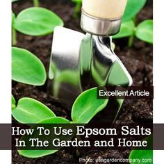 How To Use Epsom Salts In The Garden and Home